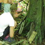 Vor einem großen Baum hockt ein Mädchen und betrachtet davorliegende Holzstücke