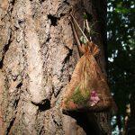 Ein Duftsäckchen gefüllt mit Moos und Zapfen hängt an einem Baumstamm
